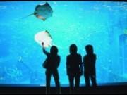 【大水槽】ダイバーが餌をあげると、エイとのダン...