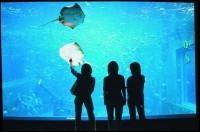箱根園水族館・箱根の緑にかこまれたアクアワールド
