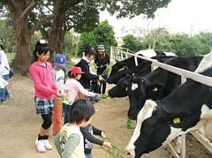 子牛にミルクをあげる他にも、ポニーのメリーゴーランドも。
