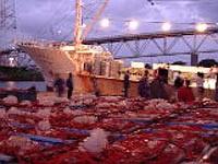 鮮魚仲買人・加工業者直営だから活きが違う、安さが違う!
