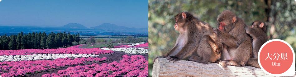 遊ぷらざ 得観光クーポンマークの施設がお得な観光クーポンを公開中です 大分県