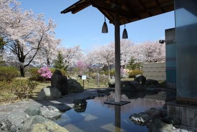 森の湯(露天風呂)桜のころは花見風呂が可能です。