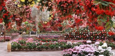 お花が一年中満開!(センターハウス)