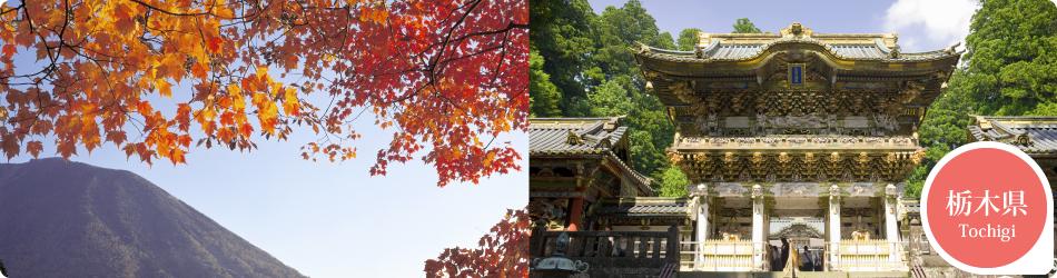遊ぷらざ 得観光クーポンマークの施設がお得な観光クーポンを公開中です 栃木県