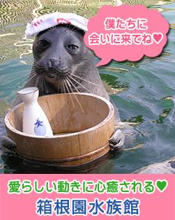 箱根水族館 愛らしい動きに心癒される